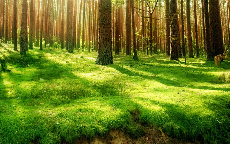 7022406-forest-background.jpg